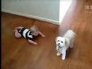 小宝宝和汪星人的幸福生活