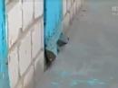 义气黑猫帮狗狗从门缝中逃生