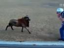 男子与公羊撞头决斗搞笑一幕