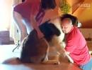 72公斤有恐高症的圣伯纳犬,上了楼梯下不来。。。