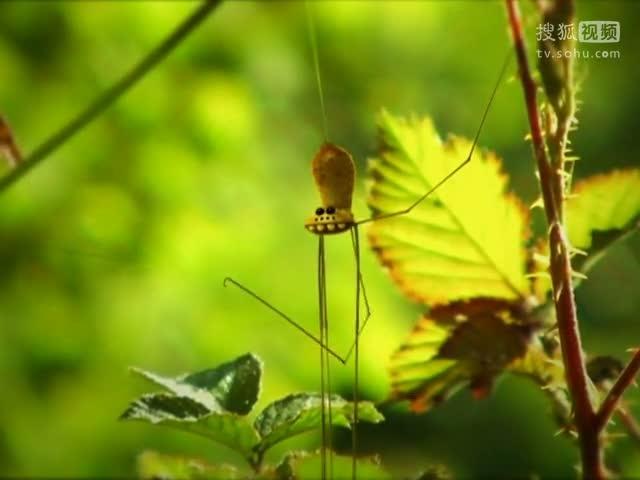 《九月怀胎》,《苏珊娜》[给力] 05/26 10:55 【动物世界 昆虫总动员
