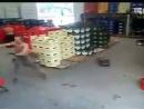 国外啤酒厂逆天一幕