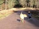 好有爱,12岁的沙皮狗等小主人一起散步
