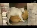 关于狗蛋大兵2顽皮故事视频的专题_搜狐视频