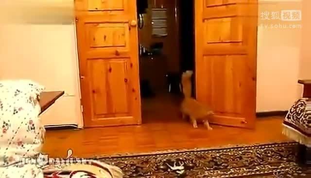 笑倒!猫咪被马里奥游戏声音吓得直跳