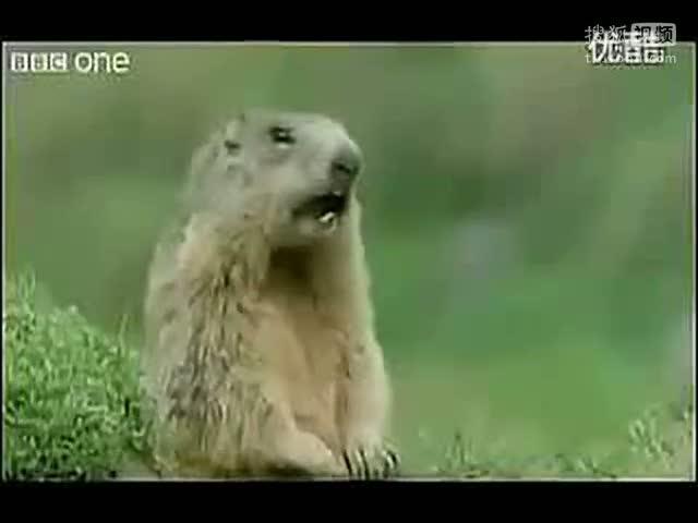 超级搞笑的动物配音,尼玛笑抽了.(中文)