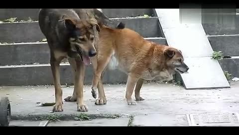 动物交i配视频_视频在线观看-爱奇艺搜索