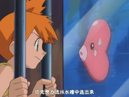 宠物小精灵放送局14小霞与爱心鱼!爱的战斗!